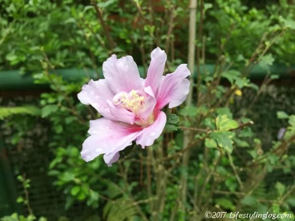 taipei-botanical-gardenIMG_3108