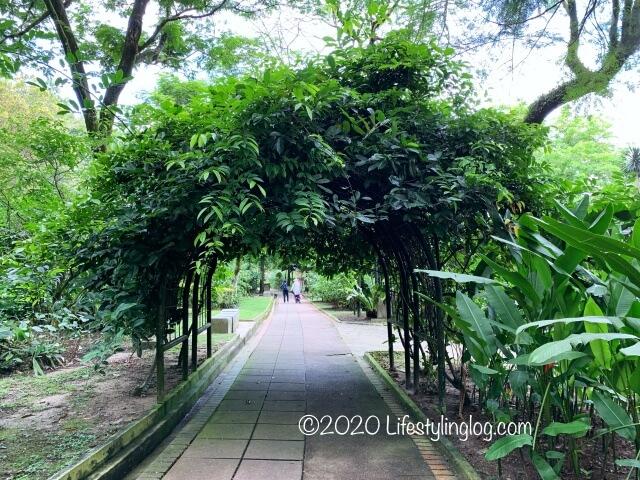 ペルダナ植物園にある木のトンネル