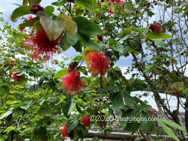ペルダナ植物園の花