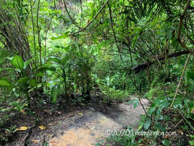 Taman TuguのNursery Trailsの中にある道