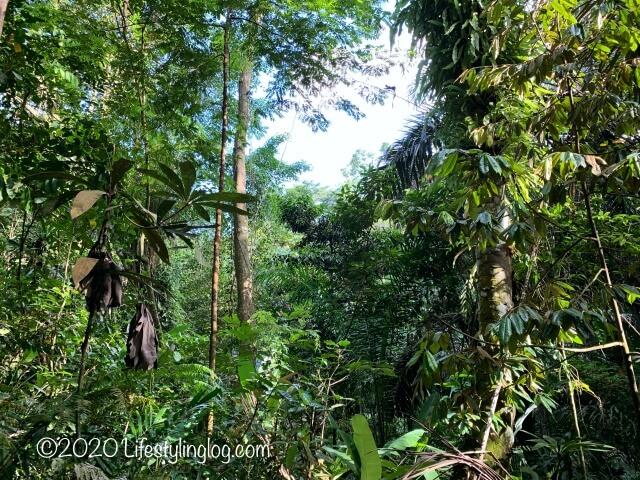 Taman Tugu内に繁っている木々