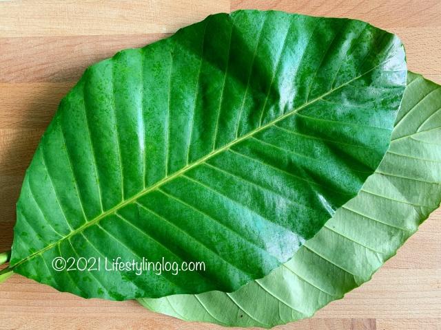 テンペ作りに使われるDillenia suffruticosa(Simpoh Air)の葉