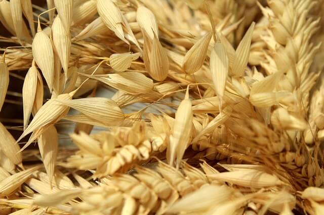 籾殻つきの燕麦(オーツ麦)