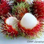 ランブータン(Rambutan)の種子